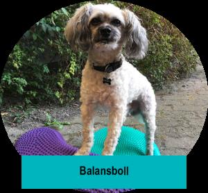 Balansbollskurs. Hundkurs i Lund Malmö Staffanstorp. Blandras balanserar på balansboll