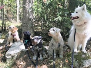 Hundrastning i Lund, hundarna sitter på rad i skogen