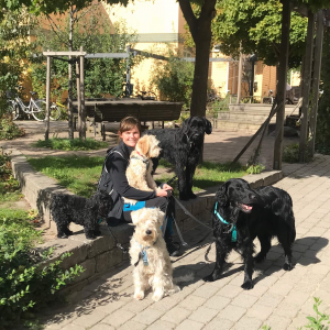 Dogwalking i Lund